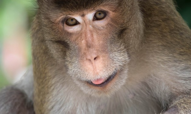 Cheap Labor: Your Replacement Just Might Be A Primate