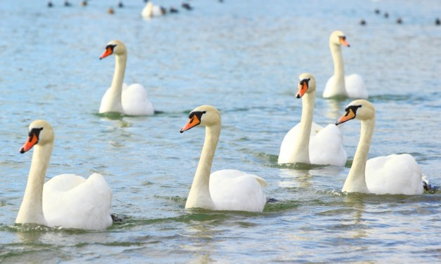 Understanding XML: Making Models and Watching for Swans